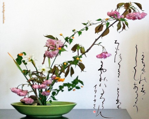 ikebana-sakura.jpg